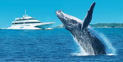 whale cruise-export