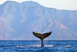whale tail-export