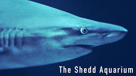 Shed Aquarium Thumbnail.jpg