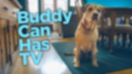 Buddy Can Has TV Thumbnail.jpg