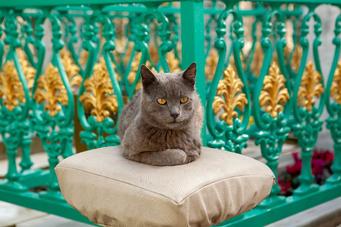 Turquoise | Cat
