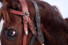 The Horse Eye