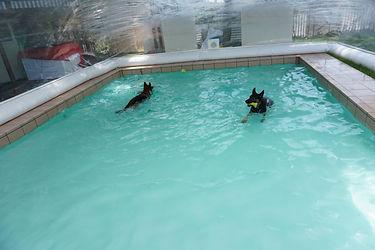 泳ぐ.JPG