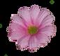 floare decupata.png