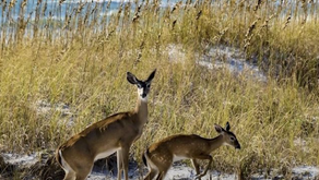 30A State Parks Guide