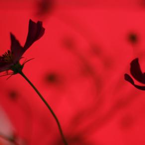 Rouge pollen