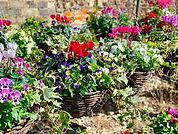 Nobbys Farm Shop Flowers