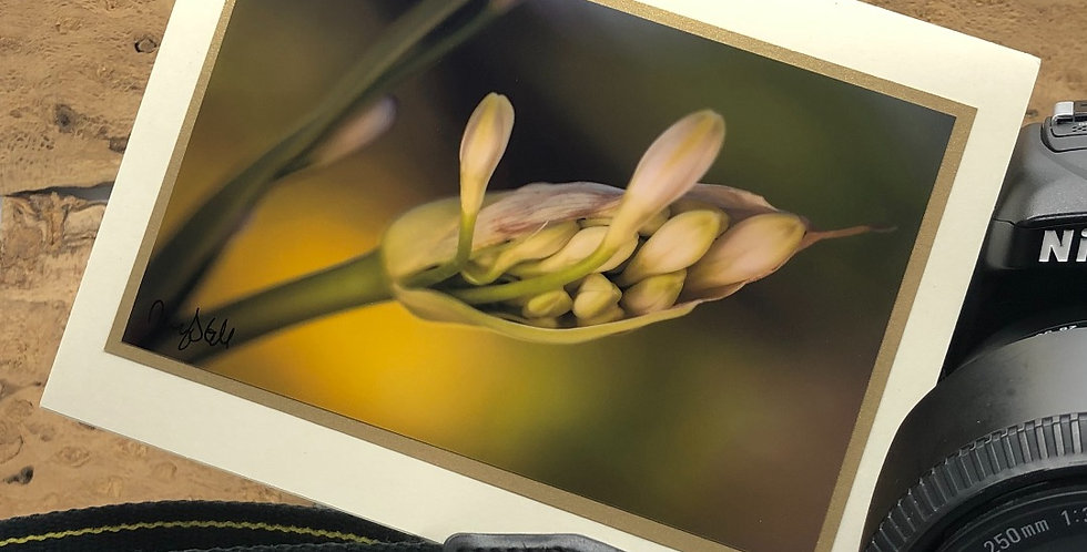 Agapanthus Bud Greeting Card by Darcy