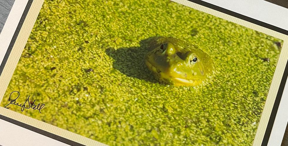 Duckweed Meets Frog