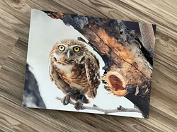 Prints & Fine Art Photography
