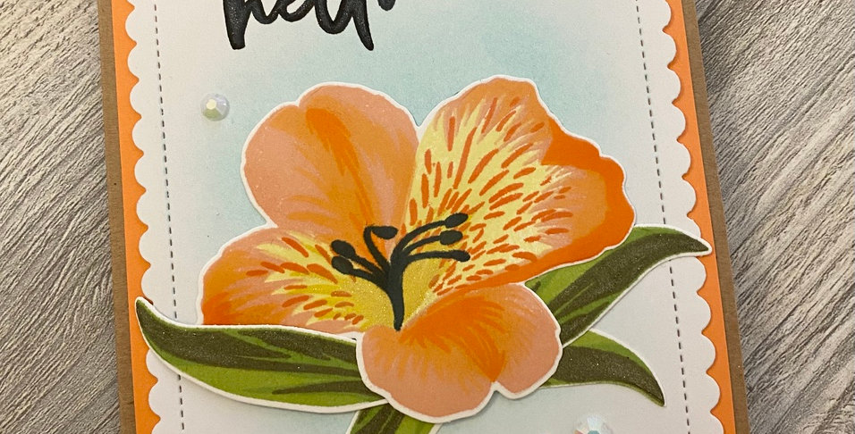 "Peruvian Lily ""Hello"" by Lexi"