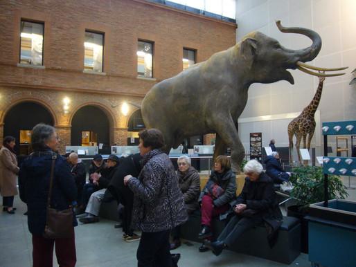 Le 22 janvier : visite de l'exposition « l'île de Pâques » au Muséum d'histoire naturelle de Toulous