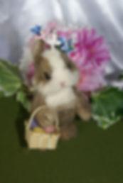 170 bunny.JPG