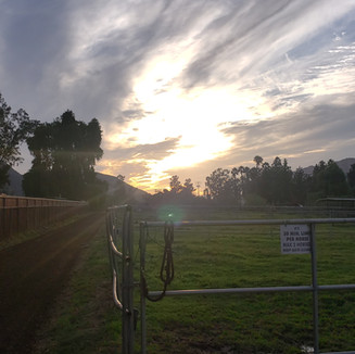Sunsets & Green Pastures