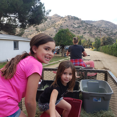 Surfing in the Feed Wagon