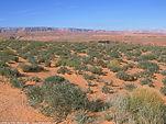 Scenery near Horseshoe Bend in Arizona
