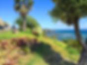 Lush green oasis in Hawaii