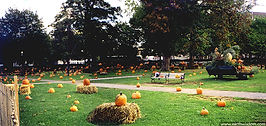 Pumpkin patch in Salem, Massachusetts