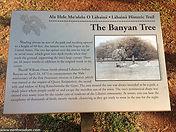 Banyan Tree Park in Lahaina, Maui