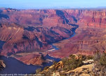 Grand Canyon Lippon