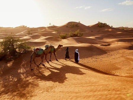 How To Ride A Camel: Tips From the Saddle