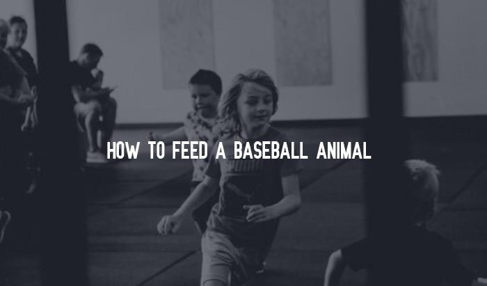 How To Feed A Baseball Animal