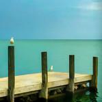 Gulls of Madison.jpg