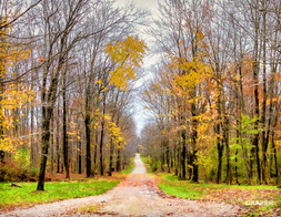 Geauga County Driveway (1 of 1).jpg