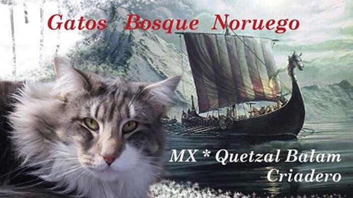 MX* Quetzal Balam