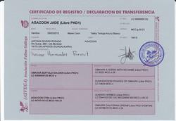 Certificado de transferencia