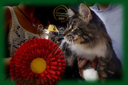 3_mainecoon_mexico_wolfhunter