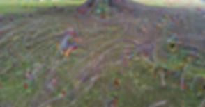 Roots%202_edited.jpg