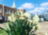 Church Lilies.jpg