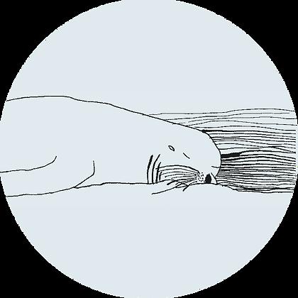 Badge otarie