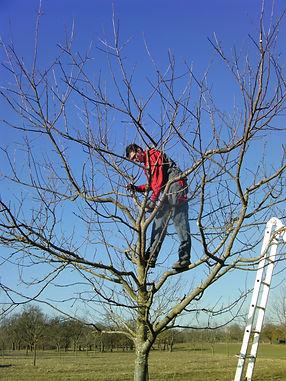 Baumschnittkurs 26.02.2011 007.JPG