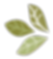 The Pistachio Tree4.png