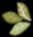The Pistachio Tree4.png