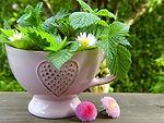 child craft course mae  tea cup fairy grden devon