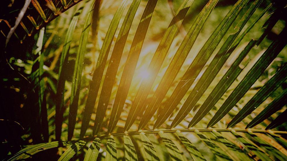 Garden Backgrounds_edited.jpg
