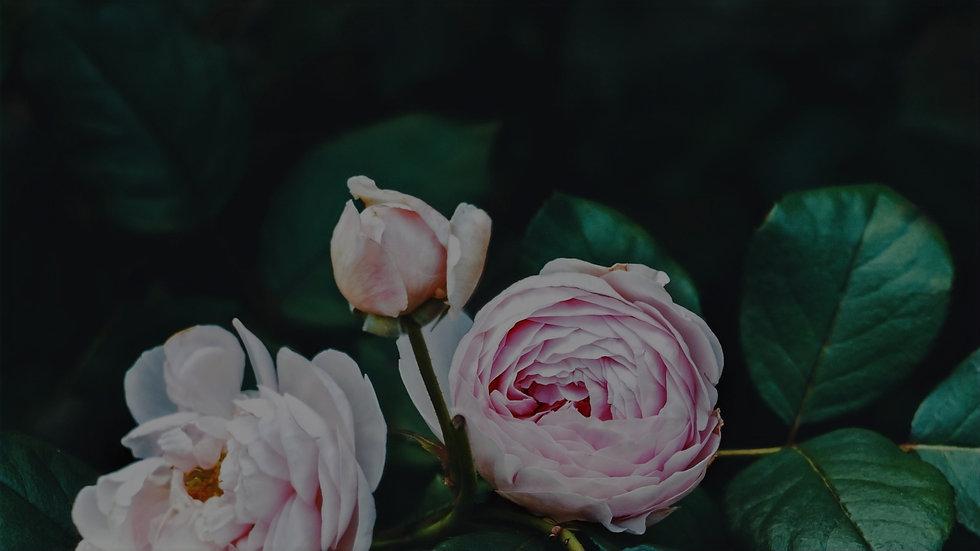 Flower Strip Backgrounds_edited.jpg