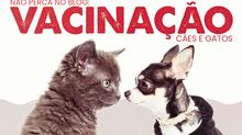 A importância da vacinação em cães e gatos.