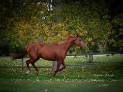 Marolia's Horse 1.jpg
