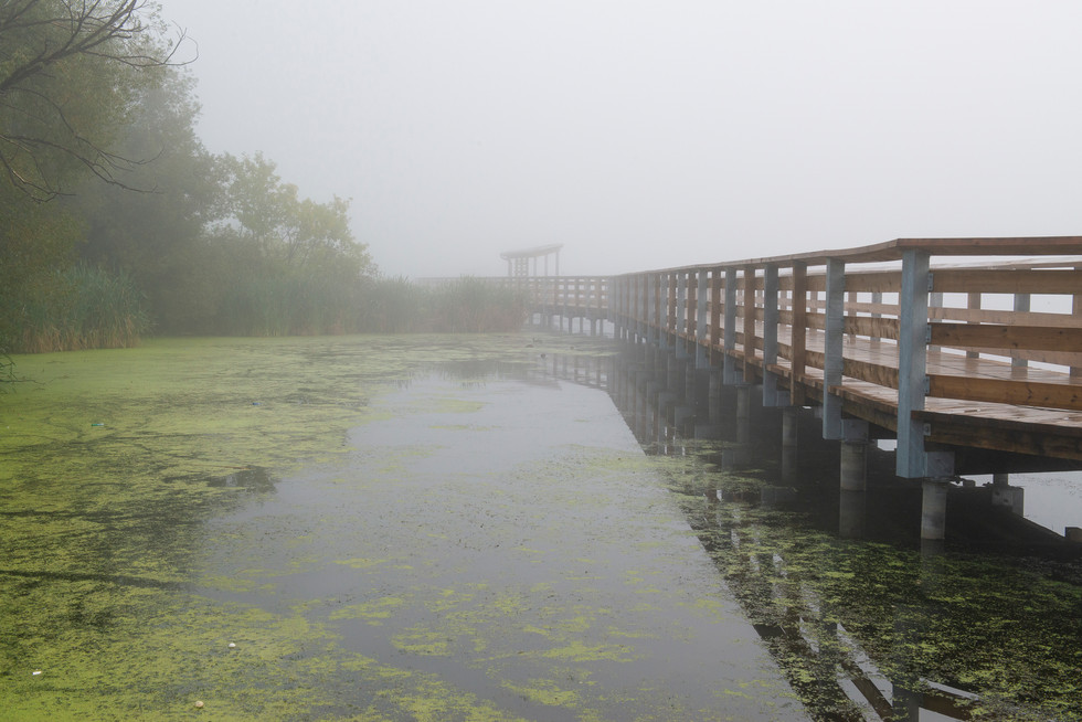 Foggie paths