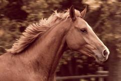 1 ProPhoto RGB Mariola horse Head Rev B