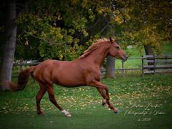 Marolia's Horse 2.jpg