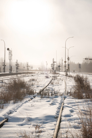 Winter Tracks of Time