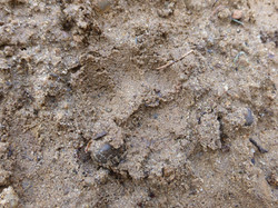 Auf den Spuren der Füchse und Dachse