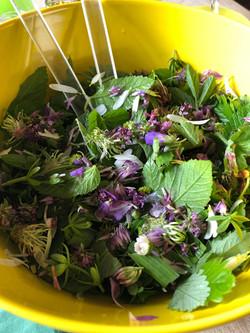 Wildkräuter Salat Frühling