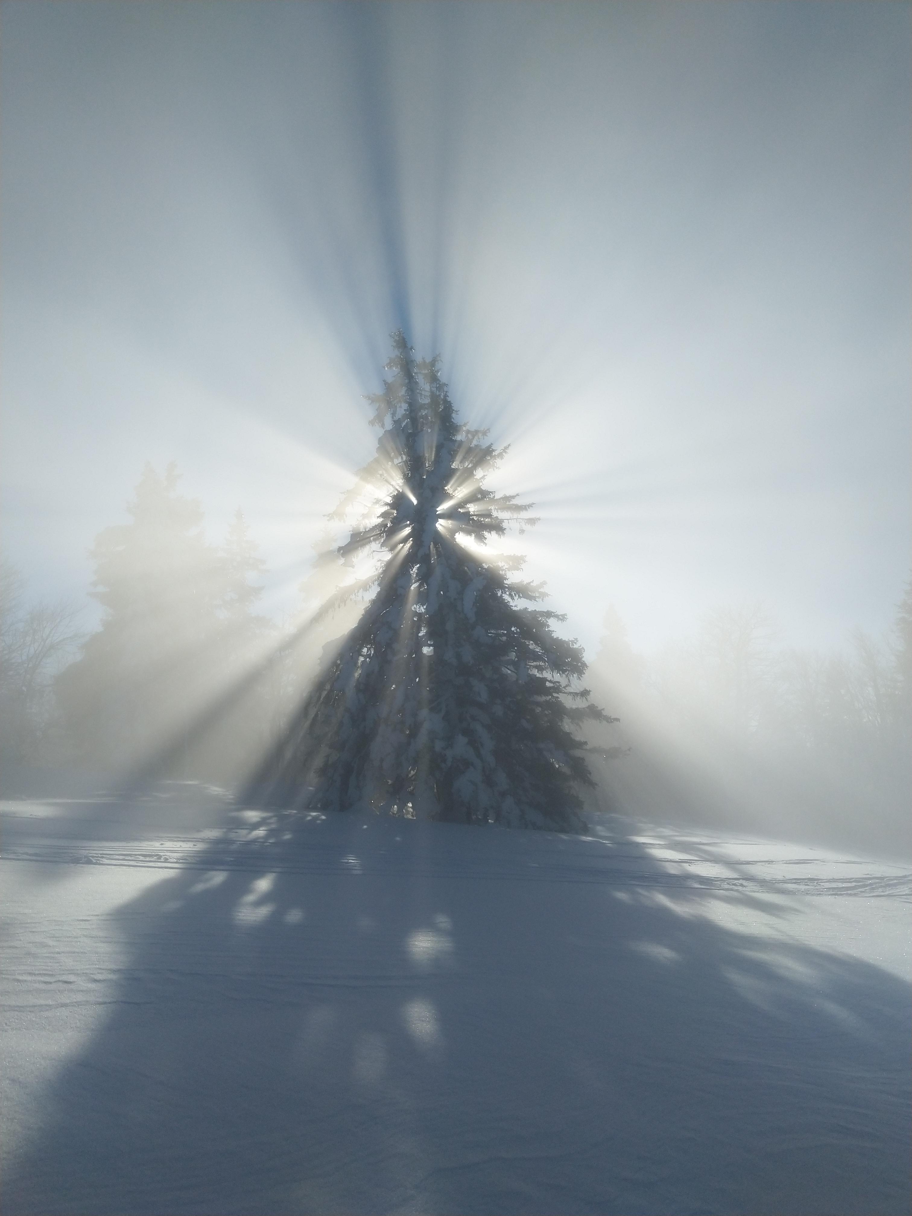 Sonne hinter Tanne