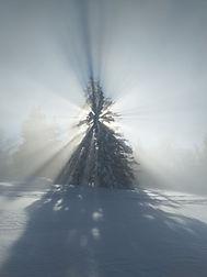 Verschneite Tanne im Jura